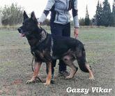 Gazzy Vikar