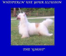 Whisper Ln' Use Your Illusion