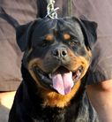 Lima of Kinders Royal Rott