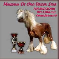 Manzana Di Oro Union Star