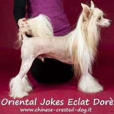 Oriental Jokes Eclat Doré