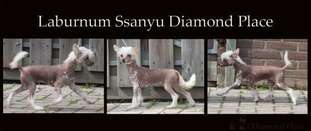 Laburnum Ssanyu Diamond Place