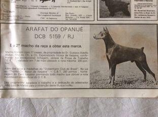 Arafat Do Opanije