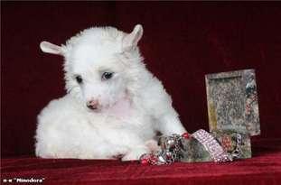 Olgushka Snowwhite Star Minodora
