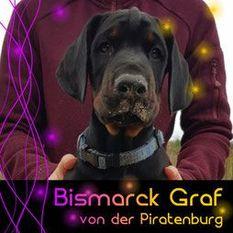 Bismarck Graf von der Piratenburg
