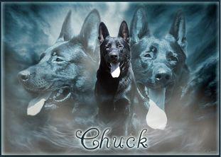 Chuck von der Lichthecke