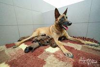 Pups Lara & Linck day 1