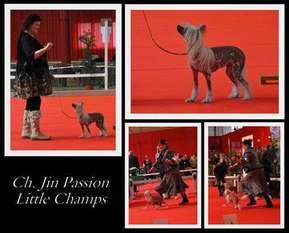 Jin Passion Little Champs