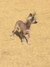 Whatadog Catch Her In Busch Stadium
