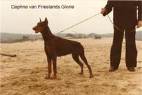 Daphne van Frieslands Glorie