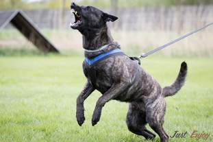 Eddy Fly Dogs Attak