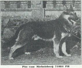 Pitt vom Michelsberg
