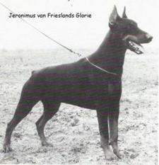 Jeronimus van Frieslands Glorie (nokko)