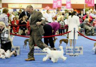 Gch Dreamstar's Nasty Burnout Barney