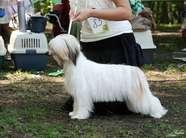 Olegro Katrin Leading Lady Dogland