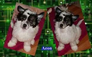 Little Cc Pony's Aeon