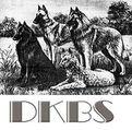 DKBS  Agility Turnier