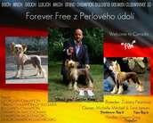 Forever Free Z Perlového údolí