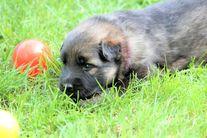 T-Wurf 3 Wochen alt
