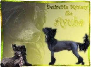 Desireme Mystery Like Ayuba
