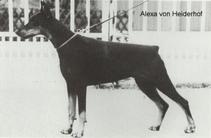 Alexa V. Heiderhof