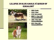 Lillifee in blue-sable IV.Queen of Eskalony