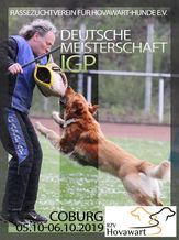 RZV Hovawart DM 2019 - IGP 3