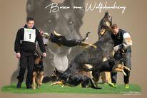 Bosco vom Wolfsbankring