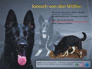 Janosch von den Wölfen