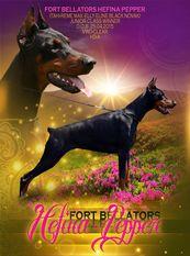 Fort Bellators Hefina-Pepper