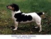 Pepper of Jack's Paradise