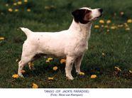Tango of Jack's Paradise