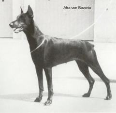 Afra von Bavaria