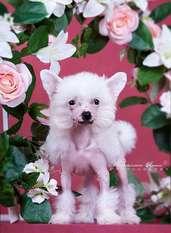 Envy White Porcelain Doll