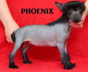 Iridessa Phoenix