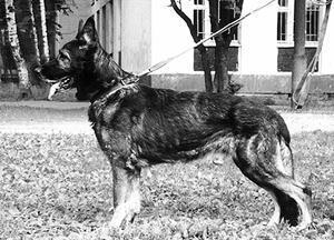 Ledzher RKF R 1321413 (Zadoya)