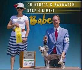 Nina's K Baywatch Babe