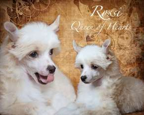 Rossi Queen Of Hearts