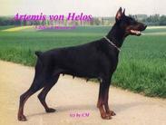 Artemis V. Helos