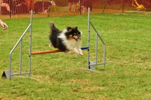 Keep Cool Toby of Agility Fascination