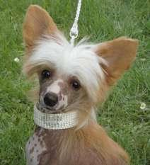 Ridgecrest's Princess Scarlett