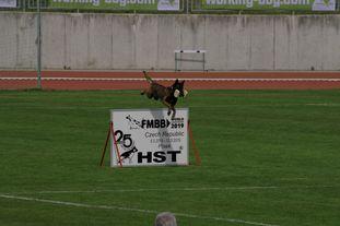 Atas of Hungarian Working Dogs
