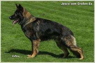 Jesco vom Großen Ex