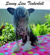 Sunny Lion Tinkerbell