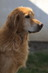 Gwenda vom Hundsbühl