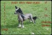 Jafari's Kween Yakima Sagirah