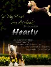 In My Heart Von Shinbashi
