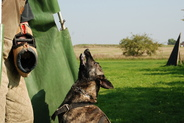 Etna Fly Dogs Attak