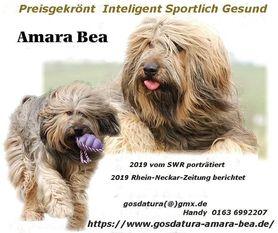 Amara-Bea VDH 08/007R0610 (Stern)