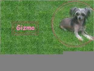 Unidog's Gizzy Gizmo
